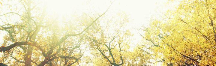 momente | herbst | oktober 2015